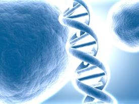 test génétique chute cheveu